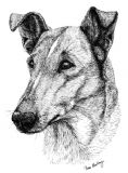 Smooth Collie Business Cards